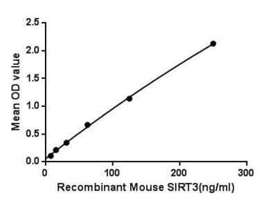 Active Sirtuin 3 (SIRT3)
