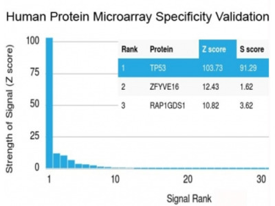 p53 Antibody (Protein Microarray-Validated Recombinant Monoclonal)