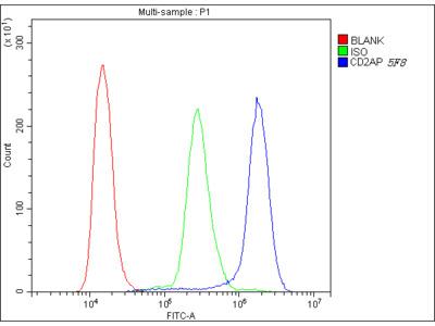 Anti-CD2AP Picoband Antibody (monoclonal, 5F8)