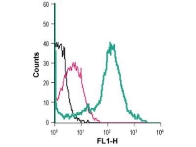 Anti-Nicotinic Acetylcholine Receptor alpha7 (CHRNA7) (extracellular)-FITC Antibody