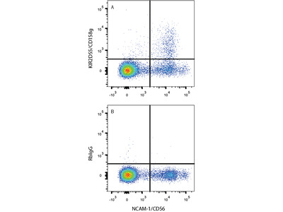 KIR2DS5 / CD158g PE-conjugated Antibody