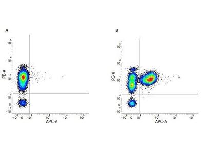 Anti-CD3 antibody [UCHT1] (APC)