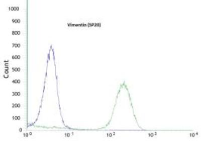 Anti-Vimentin antibody [SP20] (ready-to-use)
