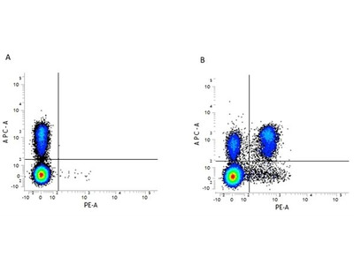 Anti-CD4 antibody [GK1.5] (PE)