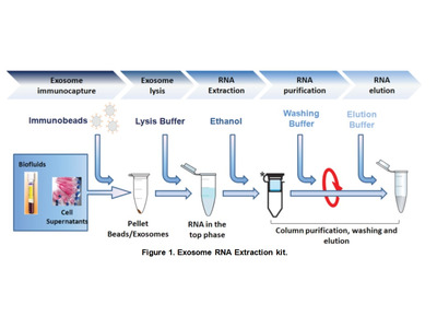 Purification Kits And Reagents Biocompare