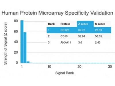 IL3RA Antibody / CD123 (Protein Microarray-Validated Monoclonal)
