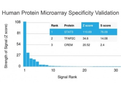 STAT3 Antibody (Protein Microarray-Validated Monoclonal)