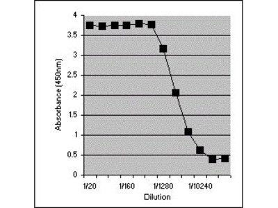 Anti-Interferon gamma antibody [XMG1.2]