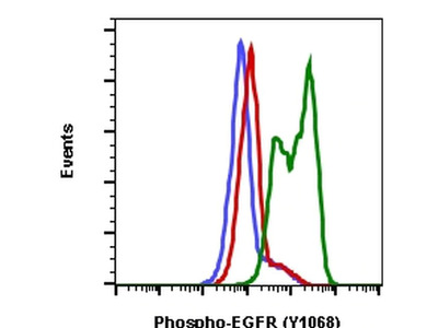 Phospho-EGFR (Tyr1068) Recombinant Rabbit Monoclonal Antibody (EGFRY1068-E5), APC