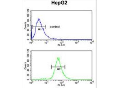 FBXL5 / FBL5 Antibody