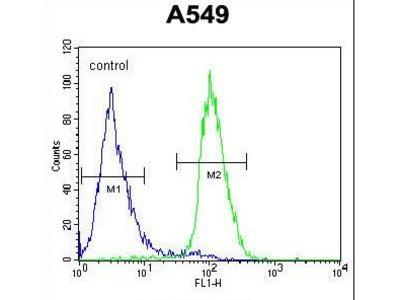 CIART / C1orf51 Antibody