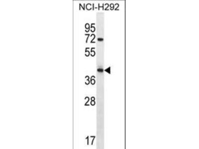 ARRDC5 Antibody