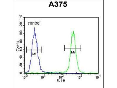 TBC1D32 / C6orf170 Antibody