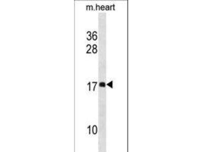 DAPL1 Polyclonal Antibody
