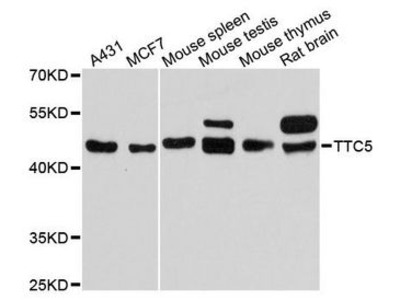 TTC5 Polyclonal Antibody