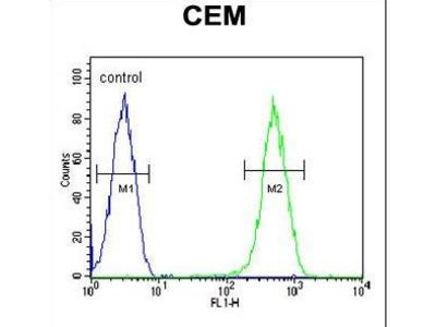 C1orf42 / NICE-1 Antibody