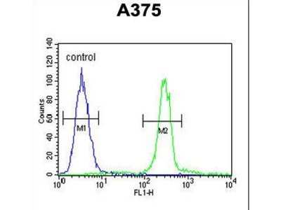 CTHRC1 Antibody