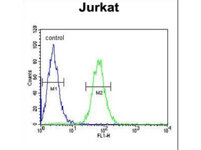PTPN11 / SHP-2 / NS1 Antibody