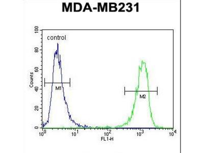 CBY1 / PGEA1 Antibody