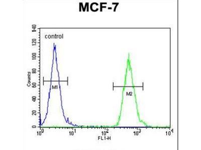 TTPAL / C20orf121 Antibody