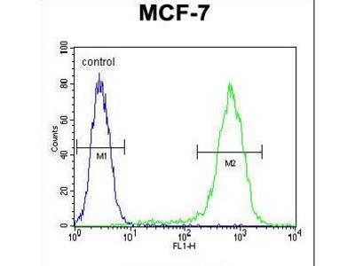 LYSMD4 Polyclonal Antibody