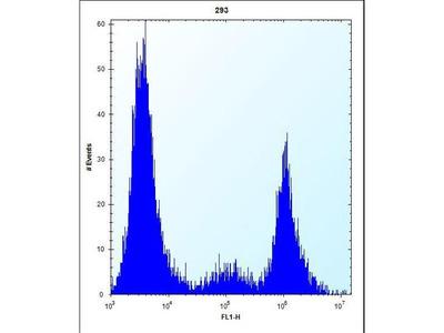 CYP-M / CYP20A1 Polyclonal Antibody