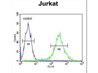 PLEKHH2 Antibody