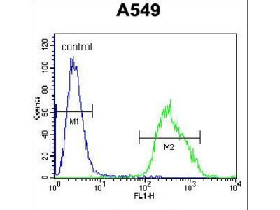 Paralemmin 3 / PALM3 Antibody
