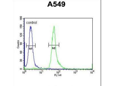 HEMK1 Antibody