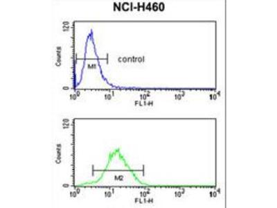 CCNB1IP1 Antibody
