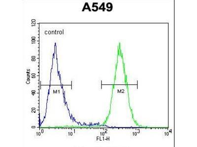 GTPBP8 / HSPC135 Antibody