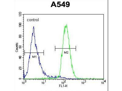 LILRA2 / CD85h / ILT1 Polyclonal Antibody