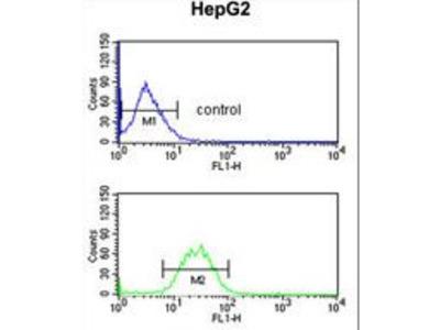 KCNH7 / ERG3 Antibody