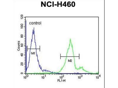 LAPTM5 Antibody