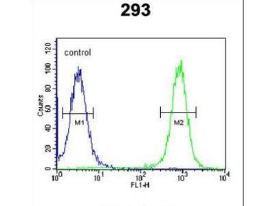 EPC2 Antibody