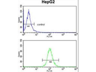 CD302 Antibody
