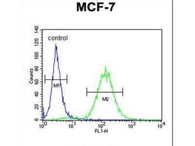 CES2 / Esterase Antibody