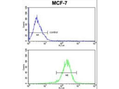 Complement C1QA Antibody