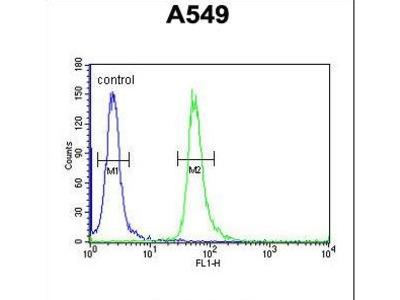 GNAT3 / Gustducin Antibody