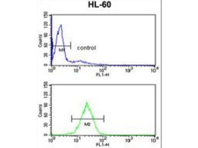 HSD17B7 / PRAP Antibody