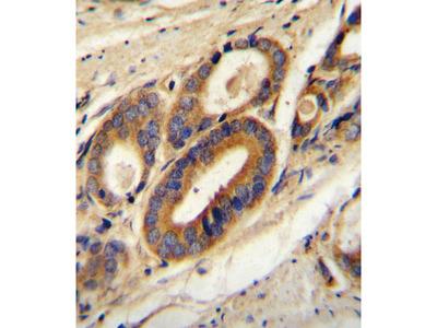 ATP6V0B Antibody