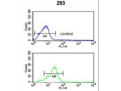 PPP3R2 Antibody