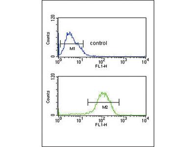 Peptide YY / PYY Antibody