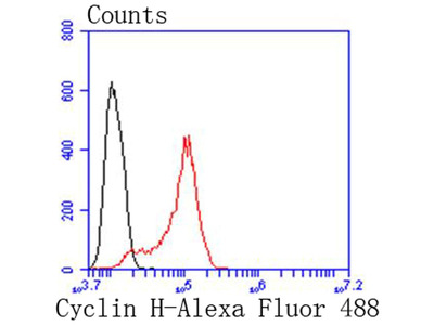 Cyclin H Recombinant Rabbit Monoclonal Antibody [SN20-48] (ET1611-84)