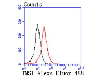 TMS1 Recombinant Rabbit Monoclonal Antibody [SN07-10] (ET1611-62)