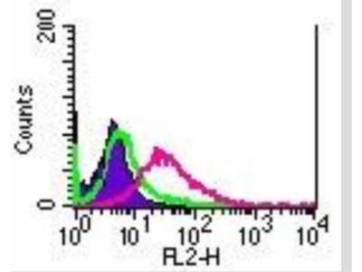 Mouse Monoclonal TRANCE / TNFSF11 / RANK L Antibody