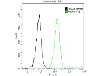 NFKB1 Antibody (2G1E3)
