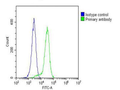 CYLD Monoclonal Antibody