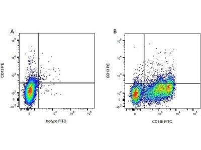 CD13 Monoclonal Antibody (CC81)