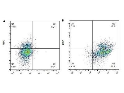 CD18 (LFA-1 beta) Monoclonal Antibody (BAQ30A)